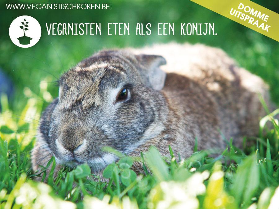 Opmerkingen die veganisten te horen krijgen: Veganisten eten als een konijn