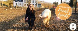 Forrest & Friends - animal sanctuary in Kaggevinne (Diest)
