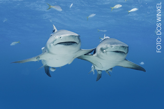 Bahamas 2011 - Foto Dos Winkel